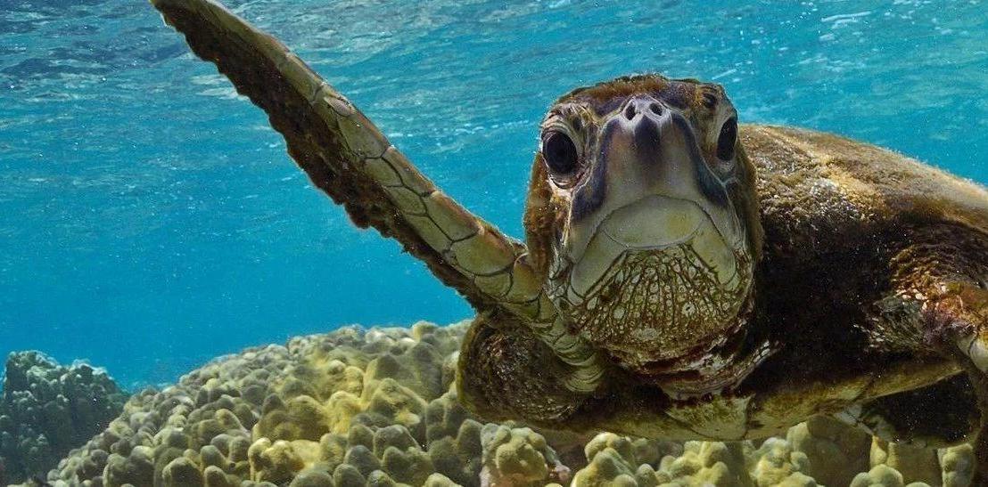 会友举报海龟神学生回国未隔离