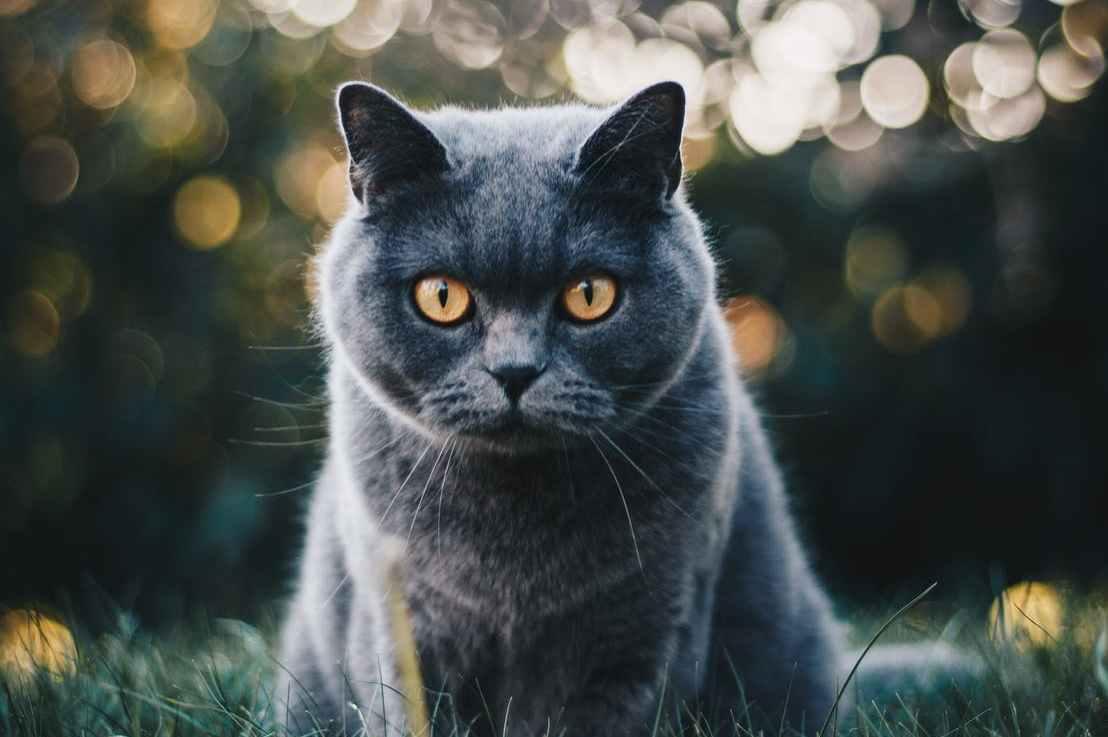 姐妹:家里来了好多猫猫,别回家